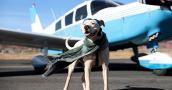 White pit bull terrier type dog in front of a small biplane