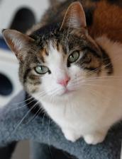 Cat posing for camera