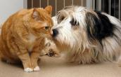 A friendly dog interacts with a cat