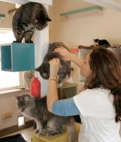 Cats in cat tree
