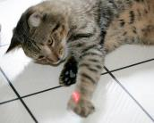 Cat with chronic respiratory infection loves to play with the laser pointer.