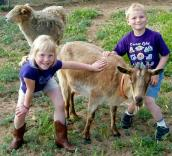 Sheep, goat and kids