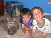 FIV-positive cat and two young boys in his new family