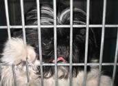 An ace-in-the-hole for Las Vegas shelter animals