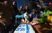Bob the cat looks over his adoption cake
