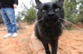 Patrick the longhair black cat who was overlooked at the shelter is now the picture of good health