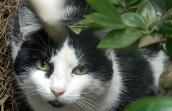 Oreo was helped through the Best Friends DeKalb Community Cat Program