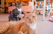 Bo and Barney, the dynamic feline-leukemia-positive duo