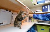 Annie the tabby cat learns to use her paws for good