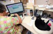 Fran, a senior cat who is FIV positive, hanging out with a person in her office