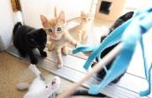 Colorful kittens from litter found in Escalante, Utah