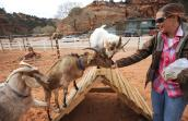 Jordan, Steve and Pan the goats with Ronnie