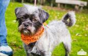 Douglas the dog from Kitsap Humane Society in Silverdale, Washington