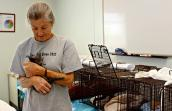 Vet tech helping one of the spayed kittens wake up following surgery in Tucson, Arizona