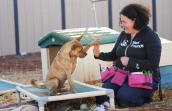 Lazarus the dog who used to run in circles learning to give a trainer a high five