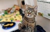 Maia the feral cat at Best Friends Animal Society
