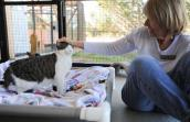 Tuffy the cat who had a rare negative reaction to surgery with a caregiver at Best Friends Animal Sanctuary