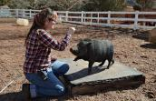 Adria teaches Elliot the pig games and uses treats as a reward