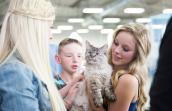 Giselle the Siamese mix cat gets some new admirers at a Best Friends adoption event in Los Angeles