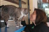 Cat whisperer Gail Takahata volunteering at Best Friends Animal Sanctuary with a cat named Jazz