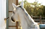 Intelligent horse named Gracie