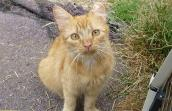 Cat who is part of Whatcom Education's Spay & Neuter Impact Program (WeSNiP)