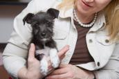 Woman holding the little dog she adopted from the Best Friends Pet Adoption and Spay/Neuter Center in Los Angeles