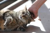 Chloe the cat who has nine lives