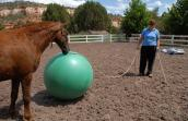 Curly Sue the horse playing with a ball at Best Friends
