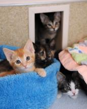 Four of the eight kittens from the hoarding situation who are now doing very well