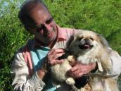Pekingese rescued from a West Virginia puppy mill being snuggled by his adoptive dad