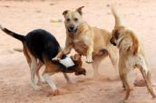 Phil, an abused dog, is making progress. Here he is playing with other dogs.