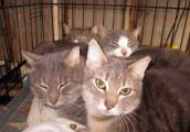 Community cats the Humane Society of Somerset County helped with trap neuter return (TNR)