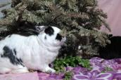 Rabbit chewing on a Christmas tree