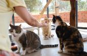 Caregiver feeding shy cats baby food to help them associate people with good things