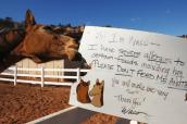 Waco the horse eating the signs telling visitors not to feed him because of his allergies