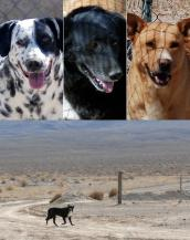 Clockwise from left: Pauley, Pirate, Lana and Nosey, four dogs rescued from a failed Gabbs, Nevada, animal sanctuary