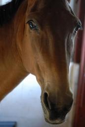Beautiful mule