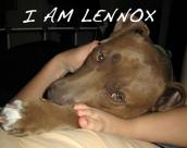 Lennox the pit bull is symbol of the fight against dog breed discriminatory laws