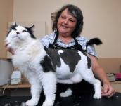 Groomer with a cat who has a lion cut