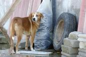 Dog who received help after flooding in Mexican state of Tabasco