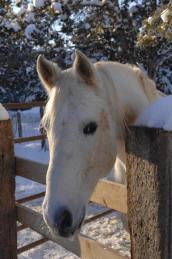 Gelded horse named Incitato