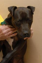 Lance, a dog rescued from Michael Vick's dogfighting ring
