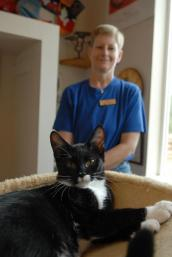 Cat caregiver Michelle Warfle with a tuxedo cat