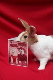 Paddy the rescued bunny with his nose in a Valentine's Day card