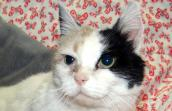 Saffron's adoption inspired reduced adoption fee for cats