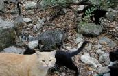San Antonio community cats (feral cats) at the Japanese Tea Garden
