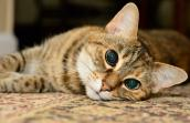 Nellie the senior brown tabby cat gets a second chance at love