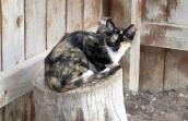 A feral cat finds her way home