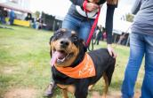 Rottweiler named Kyra at super adoption event